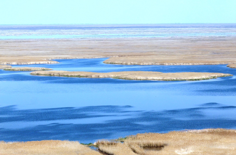 Камышовое царство на озере Судочье