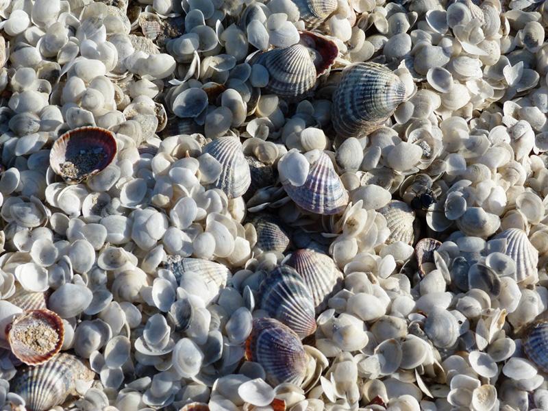 Ракушки на берегу Аральского моря