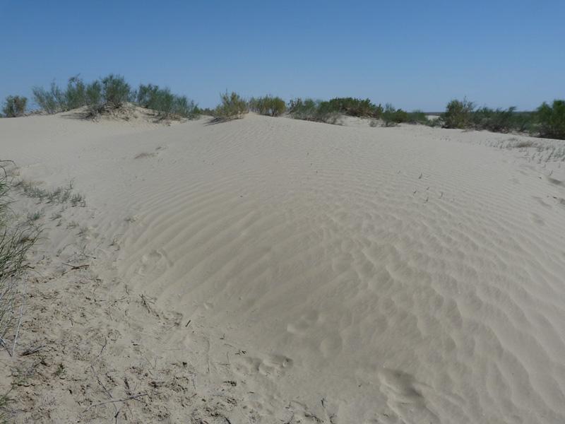 Песчаные волны Аралкума