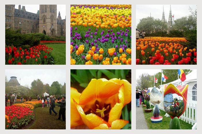Оттава. Фестиваль тюльпанов